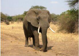 Cât transpiră un elefant într-o zi fierbinte?
