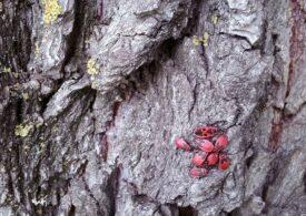 Ministerul Mediului vrea să protejeze gândacii din pădurile Parcului Natural Putna