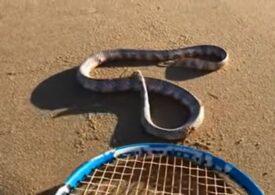 VIDEO Un șarpe fără cap pare să atace un om. Este posibil așa ceva? Explicațiile oamenilor de știință