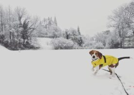 Meteo: Ninge înainte de weekendul care va aduce minime de minus 20 de grade