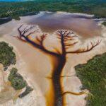 """Viralul zilei: Arborele vietii """"desenat"""" pe suprafaţa lacului"""