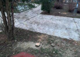 Un cetățean a semnalat că doi arbori au fost tăiați din Parcul Luigi Cazzavillan. Cum a reacționat Clotilde Armand