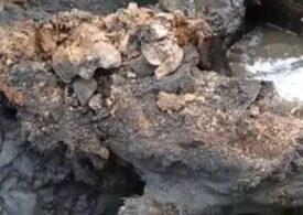 A fost descoperit cel mai bine conservat rinocer lânos (Video)