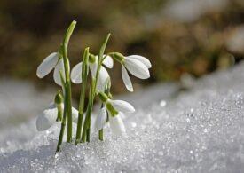 Prognoza meteo în săptămâna 18–24 ianuarie: Trecem rapid de la iarnă la primăvară