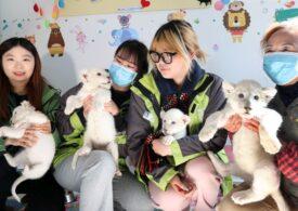 Patru pui de leu alb fac senzație în China (Galerie foto)