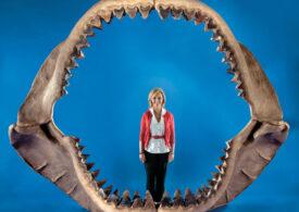 Cel mai mare rechin din istorie era canibal din fașă