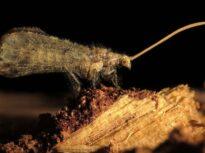 """Asul din mâneca unei insecte: Cu un """"vânt"""" poate ucide mai multe termite!"""