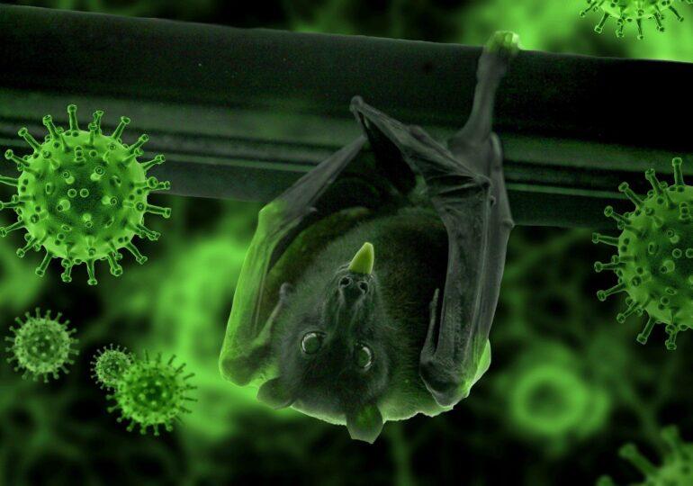 Oamenii de știință de la laboratorul din Wuhan au recunoscut că au fost mușcați de lilieci cu Covid