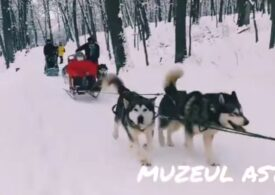 Veste bună pentru iubitorii de zăpadă: Plimbări cu sania trasă de câini, în premieră la cel mai mare muzeu în aer liber din țară (Video)