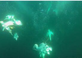 Specia care poate plonja în apă cu o viteză de 80 km/h fără să-și frângă gâtul (Video)