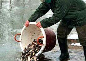 Râul Someş, populat cu o specie invazivă de peşte - Garda de Mediu cercetează situaţia