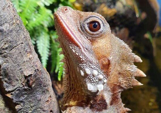 Fenomen în premieră observat într-o grădină zoologică. Femela s-a transformat în mascul!