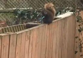 """Viralul zilei: Cum se transformă o simpatică veveriță într-un """"criminal periculos"""""""