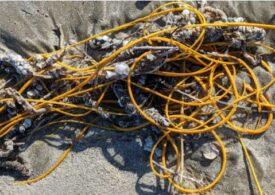 O ciudată creatură, ca o grămadă încâlcită de sfori, a fost găsită eșuată pe o plajă din Texas