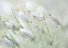 Primăvară în toată regula în ultima săptămână de iarnă. În unele zile vor fi chiar și 19 grade