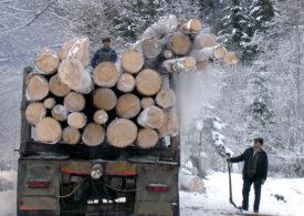 A fost lansată noua versiune a aplicaţiei Inspectorul Pădurii - oricine poate afla dacă un transport de lemn este legal