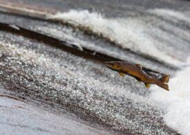 """Peştii de apă dulce sunt în declin """"catastrofal"""". 16 specii au dispărut numai anul trecut"""