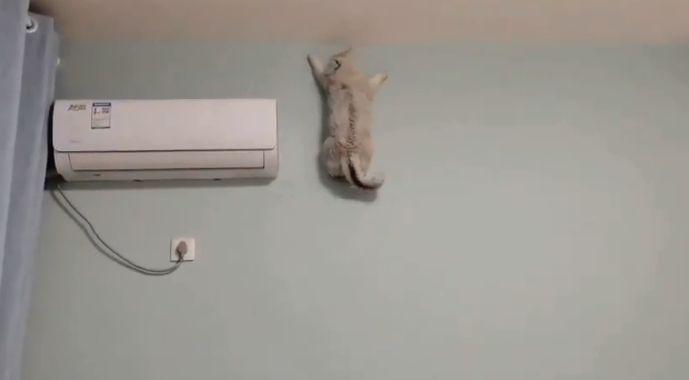 Viralul zilei: Cum a cucerit Internetul o pisică-păianjen
