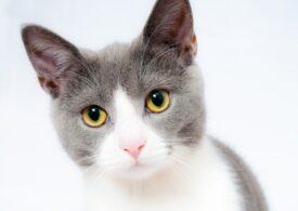 Proprietarii de câini şi pisici din Coreea de Sud îşi pot testa pentru noul coronavirus animalul de companie