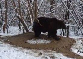 Primăria din Piatra Neamț face sondaj pentru a afla dacă localnicii mai vor Zoo, după ce au apărut imagini cu un urs traumatizat