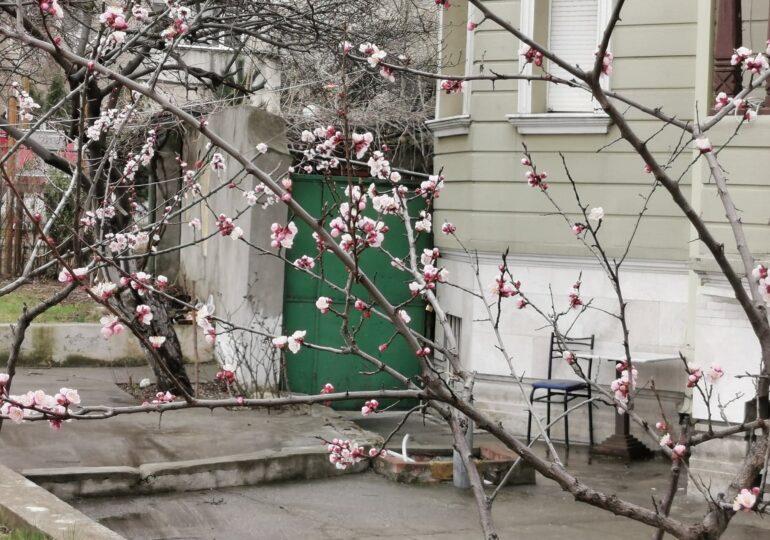Meteo: Încă puțin și vine primăvara