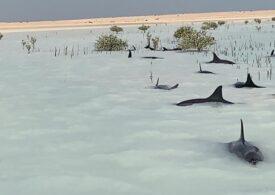 Zeci de delfini au fost salvați în largul Arabiei Saudite
