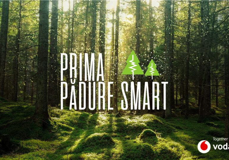 Prima pădure inteligentă din România: Cum ajută la combaterea defrișărilor ilegale