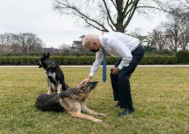"""Câinii lui Biden au fost trimişi acasă în Delaware, în urma unui """"incident cu muşcături"""" la Casa Albă"""