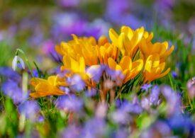 Vine primăvara, nu doar în calendar - prognoza meteo pe două săptămâni