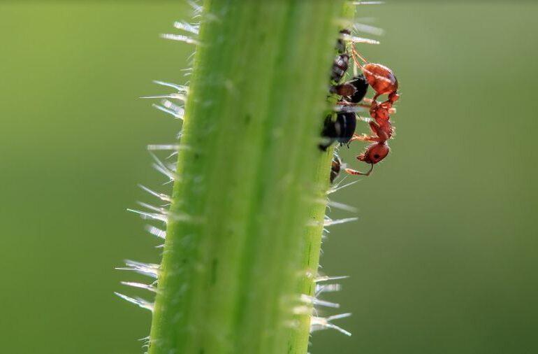 Distanțare socială dusă la extrem: Cum procedează furnicile sau albinele atunci când se îmbolnăvesc