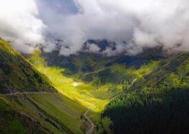 Suprafaţa terenurilor împădurite din România creşte de la an la an. Avem peste 7 milioane de hectare  de pădure