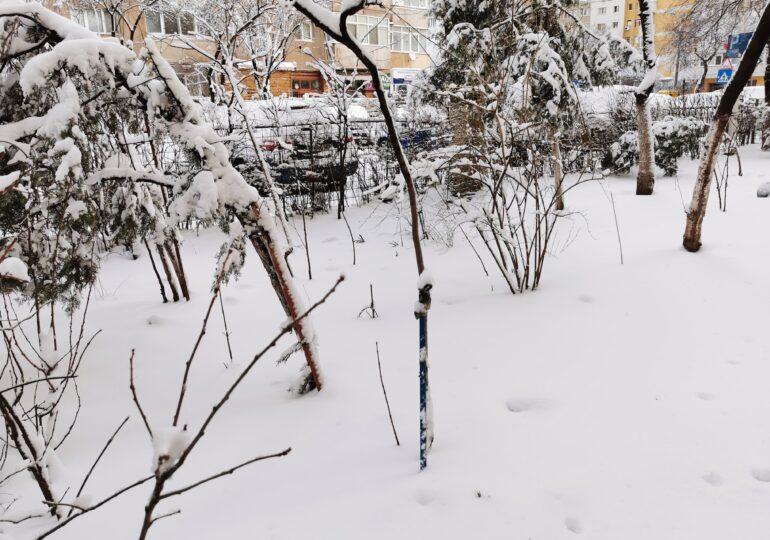 Informare meteo de ninsori pentru toată țara și cod galben pentru mai multe județe. Cum va fi vremea în Capitală