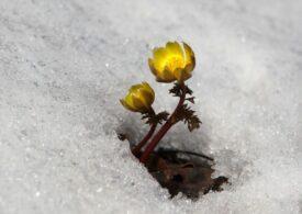 Meteo: Iarna nu se dă dusă
