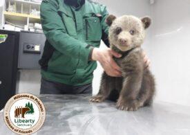 """Un ONG a fost amendat cu 10.000 de lei după ce a salvat doi pui de urs: """"Noi luptăm în primul rând pentru viaţă!"""""""