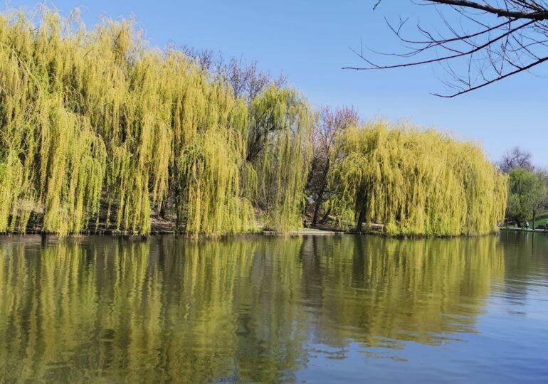 Un bărbat a fost găsit mort în lacul IOR din București