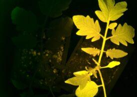 """Tehnologia care face posibil ca plantele să """"spună"""" când au nevoie de ajutor"""