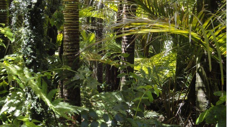 Mai puțin de 3% din ecosistemele mondiale mai sunt intacte. Harta cu ultimele locuri neatinse de mâna omului și o veste bună