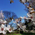 Vremea în săptămâna 12–18 aprilie: Val de aer rece, precipitații abundente, chiar revin ninsorile
