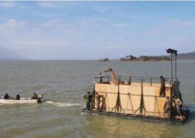 Operațiune de amploare pentru salvarea unor girafe de pe o insulă care se scufunda