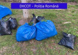 Doi bărbați prinși în timp ce încercau să arunce saci cu cannabis în Dunăre au fost arestați preventiv (Foto)