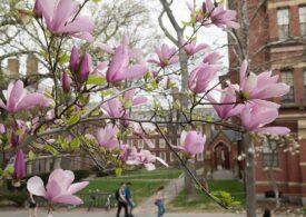 Universitatea Harvard nu mai primeşte studenţi nevaccinaţi în campus