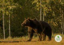 Uciderea ursului