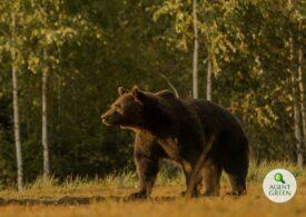 Prima reacție a prințului din Liechtenstein acuzat că l-a ucis pe marele urs brun. Ministrul Mediului spune că nu știe dacă îl chema Arthur sau Ioniță