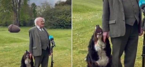 Viral: Câinele care şi-a eclipsat președintele