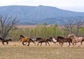Măgarii și caii sălbatici fac ceva esențial pentru ecosisteme și biodiversitate