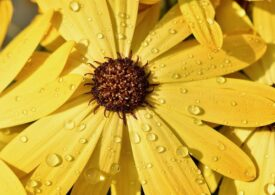 Meteo: Ne așteaptă o săptămână răcoroasă și ploioasă