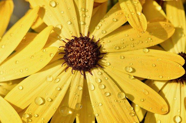 Meteo: Vin ploile, iar temperaturile scad ușor