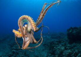 """Lecțiile pe care le predă """"My Octopus Teacher"""", filmul care a învins """"colectiv"""" la Premiile Oscar"""