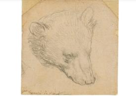 """Cap de urs vândut cu 14 milioane de euro? Depinde cine """"l-a împușcat"""""""