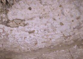Au rezistat zeci de mii de ani, dar acum cele mai vechi desene rupestre dispar sub ochii noștri